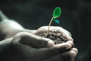 hand holding a seedling